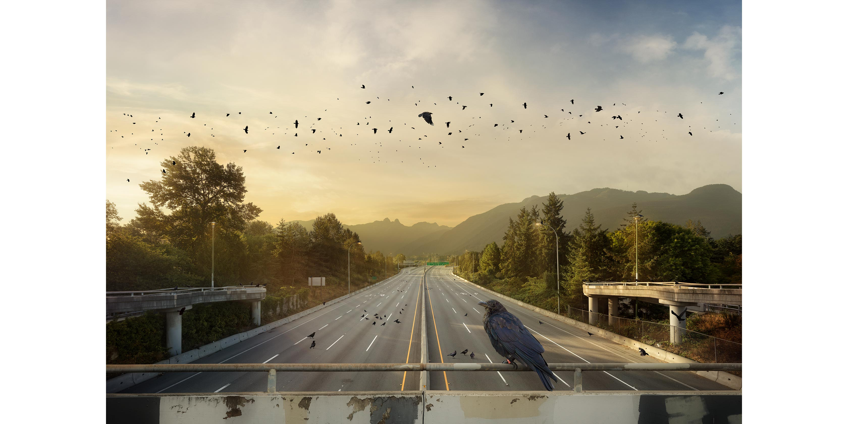 <p align=center><em>The Crow Commute</em> <br />40″ x 60″, archival pigment print on aluminum, edition of 5<br /> 30″ x 45″, archival pigment print on aluminum, edition of 7</p>